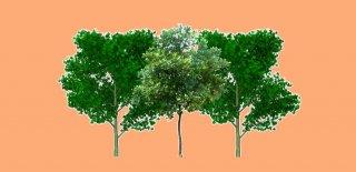 Rüyada Ağaçlık Görmek Ne Anlama Gelir?