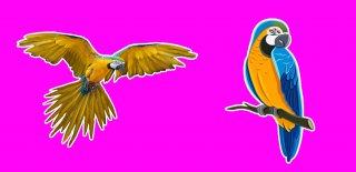 Papağan Türleri ve Özellikleri Hakkında Bilgi