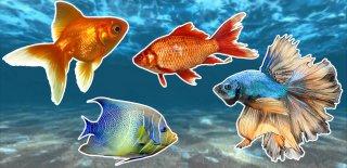 Yeni Başlayanlar İçin En İyi 16 Akvaryum Balığı