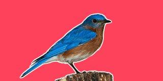 Rüyada Kuş Görmek Ne Anlama Gelir?