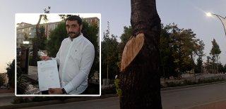 İş Yerinin Önündeki Ağaçları Kesti, 50 Bin TL Para Cezasına Çarptırıldı!