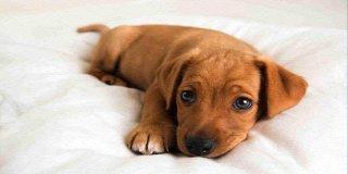 Yavru Köpek Eğitimi Hakkında Bilmeniz Gereken 21 Şey!