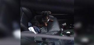 Anahtarını Arabada Unutan Adamın Köpeğinden Yardım İstediği Anlar Sosyal Medyayı Kırdı Geçirdi!