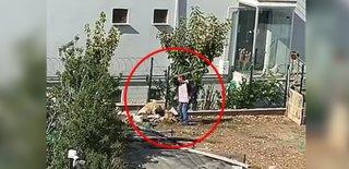 Bahçeye Bağladı Köpeği Sopayla Döven Adam Kameradan Kaçamadı!