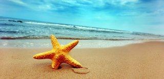 Rüyada Deniz Yıldızı Görmek Ne Anlama Gelir?