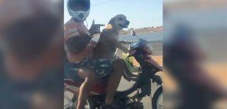 Köpek Motosiklet Sürdü, Sosyal Medya İkiye Bölündü!