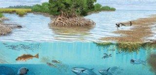 Ekosistemi Oluşturan Unsurlar Nelerdir?