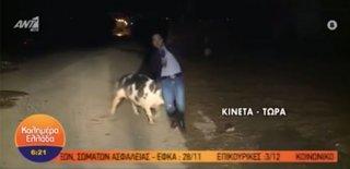 Habere Gitti, Haber Oldu! Canlı Yayın Yapan Muhabiri Domuz Böyle Kovaladı!