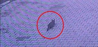 Vicdansız Sürücü Yola Çıkan Kediyi Aracıyla Ezip Kaçtı! Güvenlik Kamerasına Yakalandı