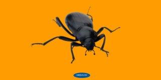 Rüyada Böcek Öldürmek Ne Anlama Gelir?