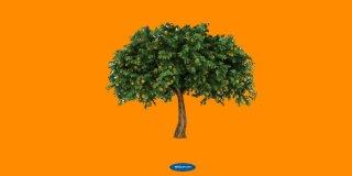 Rüyada İncir Ağacı Görmek Ne Anlama Gelir?