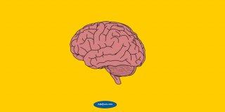 Rüyada Beyin Görmek Ne Anlama Gelir?