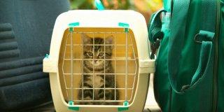 Küçük Dostunuz Her Daim Güvende! En İyi Kedi Taşıma Çantası Modelleri Sizlerle!