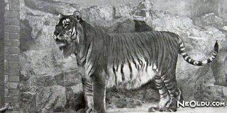 Türkiye'de Nesli Tükenen Hayvanlarımız