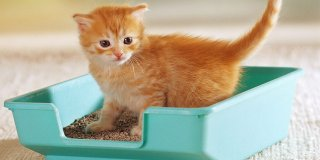 Hangi Kedi Kumu Daha İyi? En İyi 10 Kedi Kumu