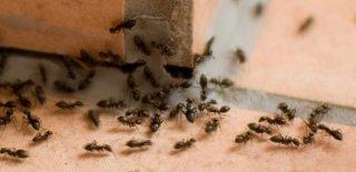 Çekirge ve Karınca İstilası ile İlgili Ayet – A'araf Suresi 133 ve 132. Ayetleri