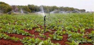 Yiyecekler Üzerinde Tarım İlaçlarının Etkisi ve Kurtulmanın Yolları