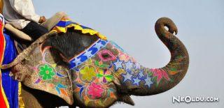 Fil Festivali (Thrissur Pooram Elephant Festival)