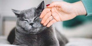 En İyi Yetişkin Kedi Maması Markaları, Çeşitleri ve Fiyatları 2020