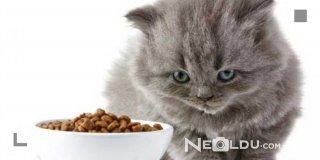 Hazımsızlık Yaşayan Kediler İçin En İyi 5 Sindirim Hassasiyetli Kedi Maması