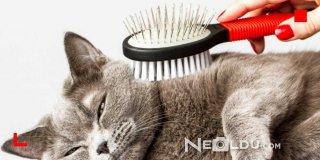 Cilt Sorunu Olan Kediler İçin En İyi 5 Deri ve Tüy Hassasiyeti Kedi Maması
