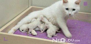 Hamile ve Emziren Kediler İçin En İyi 5 Yavru ve Yetişkin Kedi Maması