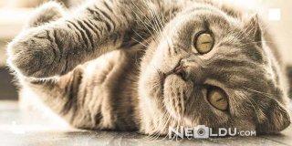 Kilo Problemi Olan Kediler İçin En İyi 5 Diyet Kedi Maması