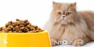 Zor Beğenen Kediler İçin En İyi 5 Seçici Damak Tadı Kedi Maması