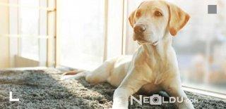 Düşük Kaloriye Sahip En İyi 5 Kısırlaştırılmış Köpek Maması