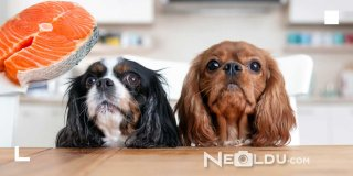 Omega Deposu En İyi 5 Balıklı Köpek Maması