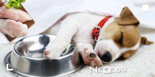 Mineral Deposu En İyi 5 Hindi Etli Köpek Maması