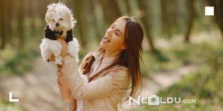 Hazımsızlık Yaşayan Köpekler İçin En İyi 5 Sindirim Hassasiyeti Köpek Maması