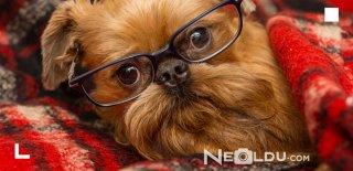 Stresli Köpekler İçin Sakinleştirici Etkiye Sahip En İyi 5 Relax Köpek Maması