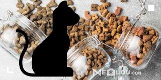 En İyi 5 Tahılsız Kedi Maması