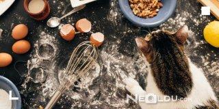 En İyi 5 Düşük Tahıllı Kedi Maması