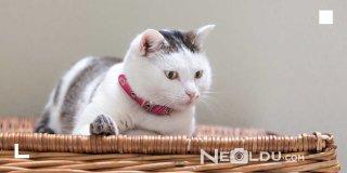 Kediler İçin Tasma Seçimi Nasıl Olmalı? En İyi 5 Kedi Tasması Modeli