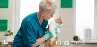 Kedilerde Kısırlaştırma Sonrası Bakım ve Beslenme