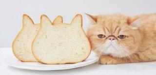 Kediler Ekmek Yer mi?