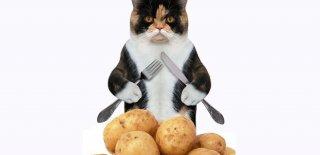 Kediler Patates Yer mi?