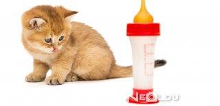 Kedilere Süt İçer mi?