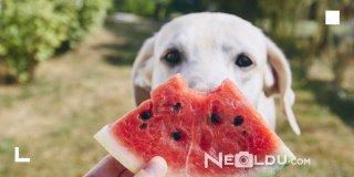 En İyi 5 Meyveli Köpek Maması