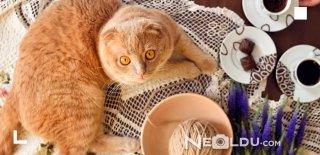 Kediler Çikolata Yer mi?