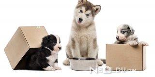 Yavru Köpekler Ne Yer? Yavru Köpek Beslenme Tablosu