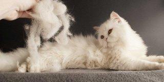 Kediler Neden Tüy Döker? Tüy Dökümünü Engelleyen En İyi 5 Kedi Maması