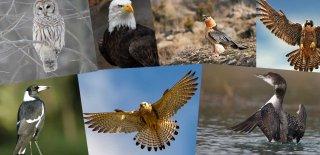 Yırtıcı Kuş Türleri - Dünyanın En Yırtıcı Kuşları