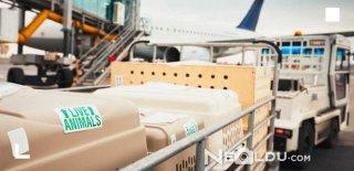 Kedi ve Köpek Uçak Yolculuğu: Uçuş Standartlarına Uygun Taşıma Çantası Nasıl Olmalı?