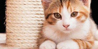 Kediler Neden Tırmalama Kullanmalı? En İyi 5 Kedi Tırmalama Önerisi