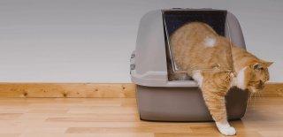 Kedi Kumu Çeşitleri ve Özellikleri