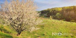 Bahar Sözleri - Anlamlı İlkbahar Sözleri, Bahar İle İlgili Güzel Sözler