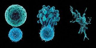 Bağışıklık Nedir? Nasıl Kazanılır?